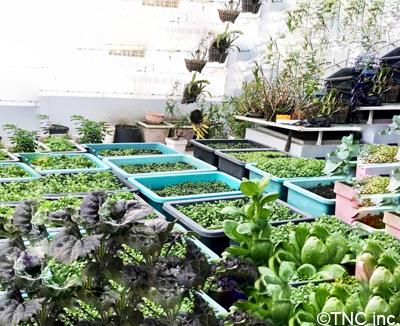House garden3